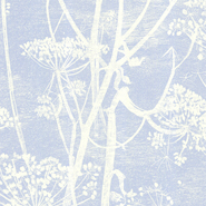 Cow Parsley (66-7050)