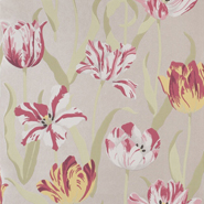 Tulipa (CH9097-010)