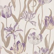 Tulipa (CH9097-080)