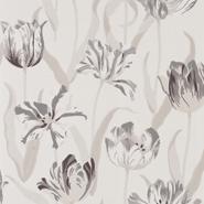 Tulipa (CH9097-091)