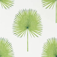 Fan Palm (DGLW216636)