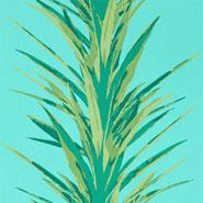 Yucca (DGLW216648)
