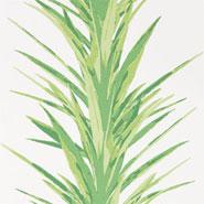 Yucca (DGLW216649)