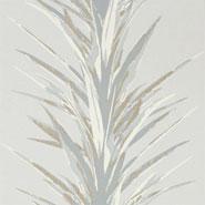 Yucca (DGLW216650)