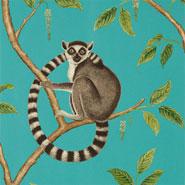 Ringtailed Lemur (DGLW216663)