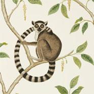 Ringtailed Lemur (DGLW216664)