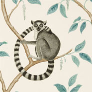 Ringtailed Lemur (DGLW216665)